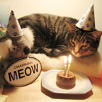CHAIRMAN MEOW BIRTHDAY CAT